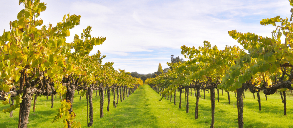 Spring Wines to Try